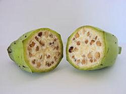 バナナ 種.jpg